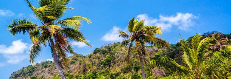 Three Palm Trees in Panama