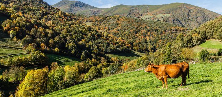 leitariegos asturias shutterstock_509289445