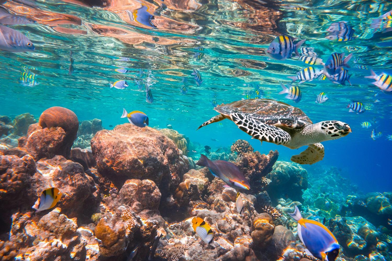 La primera discoteca bajo el agua del mundo for Hoteles en el agua maldivas