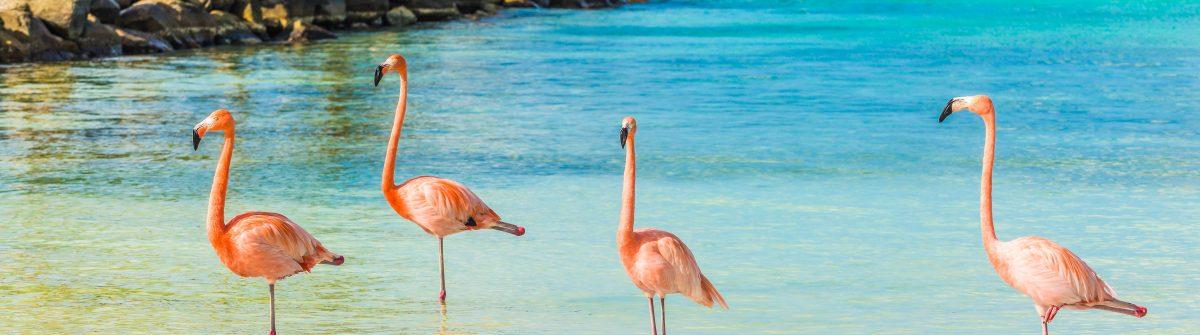 Four flamingos on the beach Aruba shutterstock_413176471-2