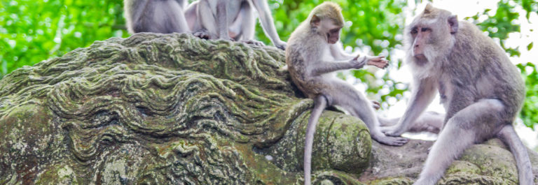 Monkey Forest,Bali Indonesia