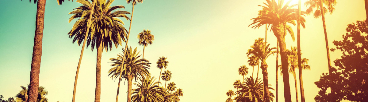 Palm Trees Hollywood Los Angeles iStock_000032047156_Large-2