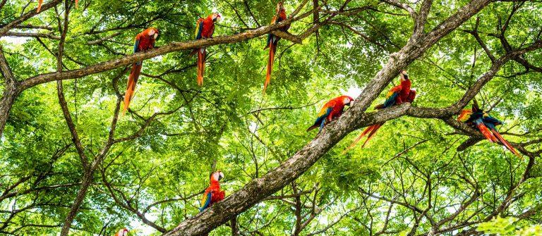 Loros en Costa Rica