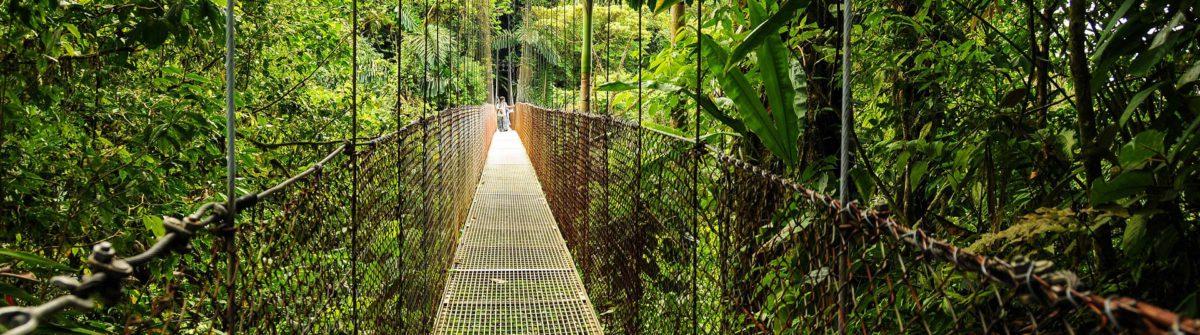 Puente selva Costa Rica
