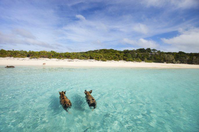Vacaciones a Florida y Bahamas