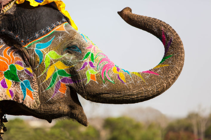 Decorated elephant.