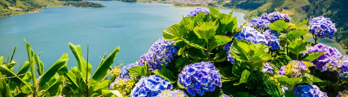 Lake of Sete Cidades with hortensia's, Azores, Portugal Europe shutterstock_254083369