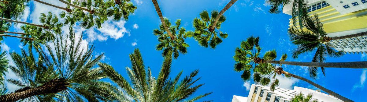 Vacaciones a Florida y Bahamas Miami