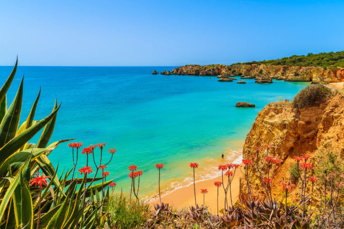 Tropical flowers on beautiful Praia da Rocha beach, Algarve region, Portugal shutterstock_282116426-2
