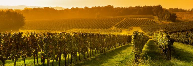 Vineyard Sunrise – Bordeaux Vineyard shutterstock_252582046-2