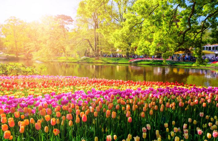 Florecientes tulipas en Holanda Parque Keukenhof