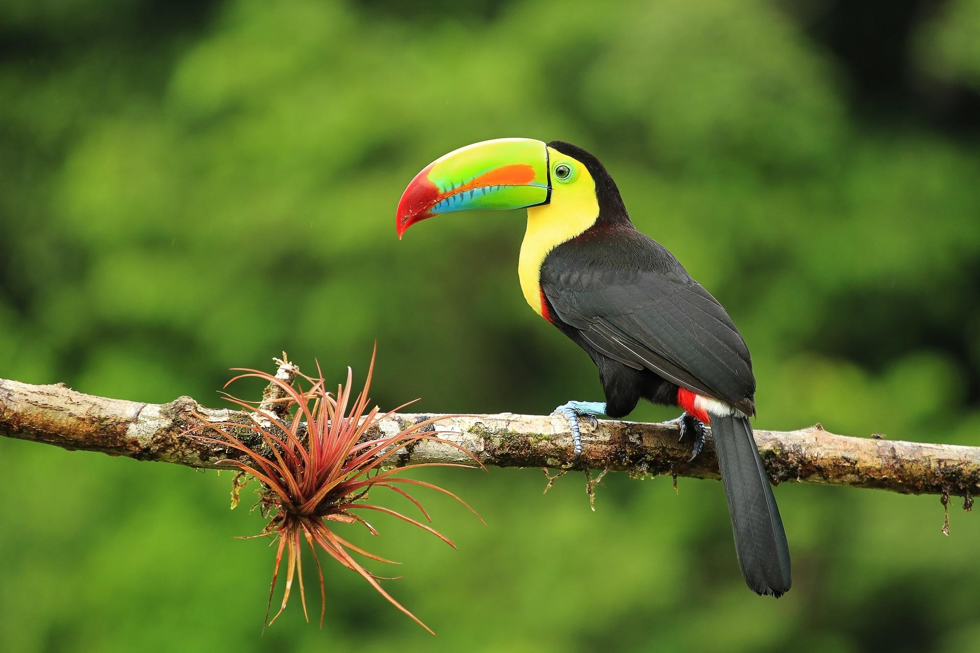 Viaje a Costa Rica san josé