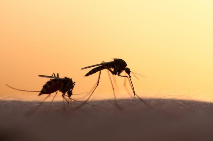 Vacunas para viajes prevenir enfermedades