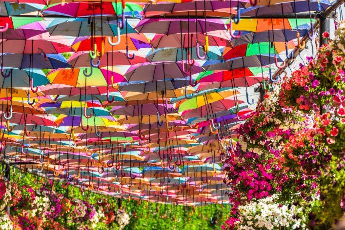 Los mejores consejos para viajar a Dubái Miracle Garden