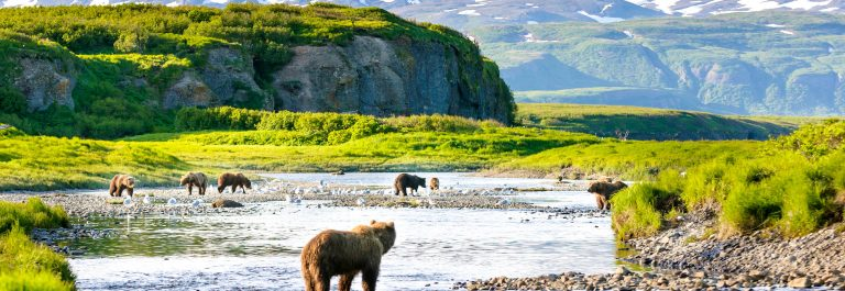 Group of Alaska Brown Bears Fishing Salmon at McNeil River USA iStock_000080063939_Large-2