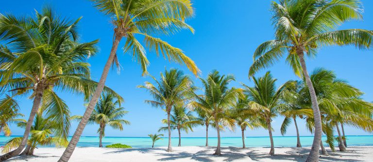 Tropical beach with palm trees shutterstock_265093823