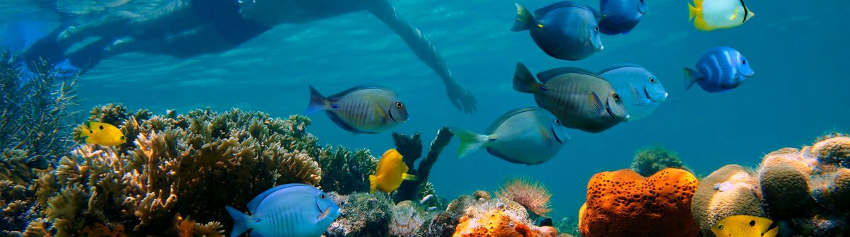 _colorful-coral-reef-with-school-of-tropical-fish-shutterstock_105565436