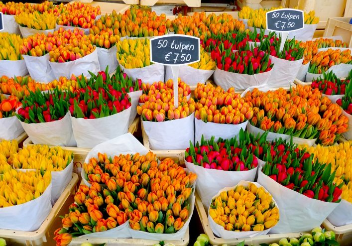Colorful tulips on sale in Amsterdam flower market_shutterstock_123824038_1000px