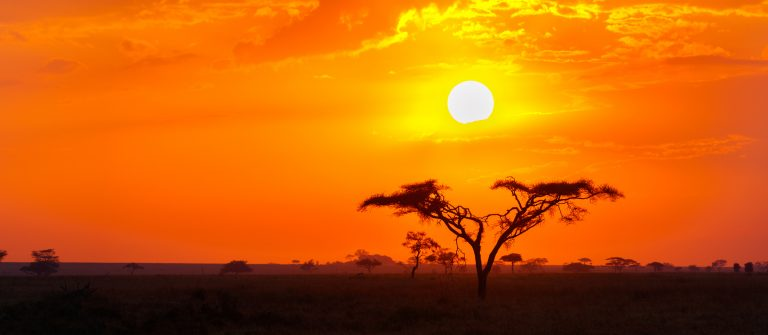 Savanna Sunrise and Acacia Tree in the Serengeti, Tanzania Africa