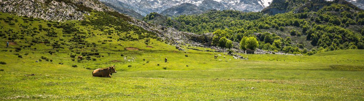 picos europa_cantabria_shutterstock_400011553 x2000