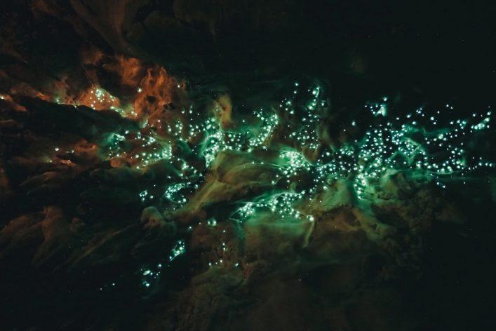 Waipu Cave Glowworm cave_445478287