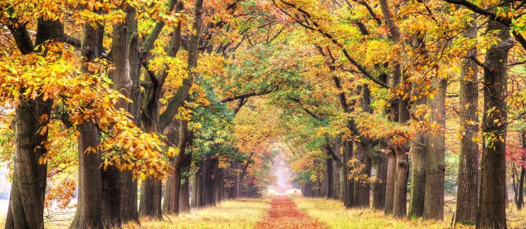 Beautiful autumn forest in national park 'De hoge Veluwe' in the Netherlands.