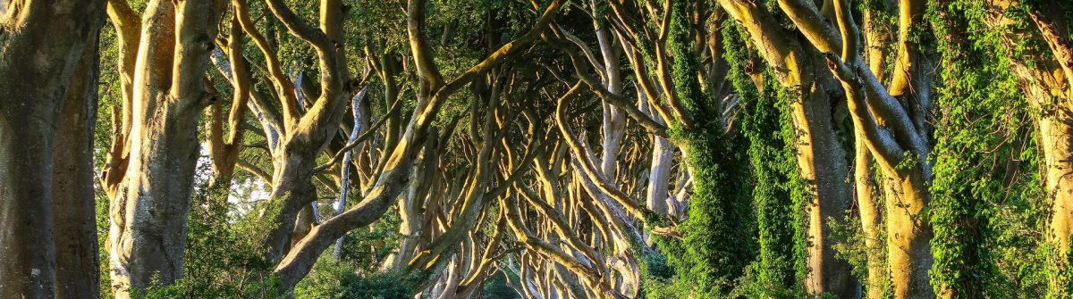 Dark Hedges VI shutterstock_187763780-2