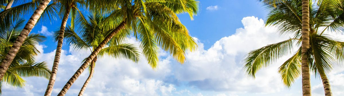 Saona island beach