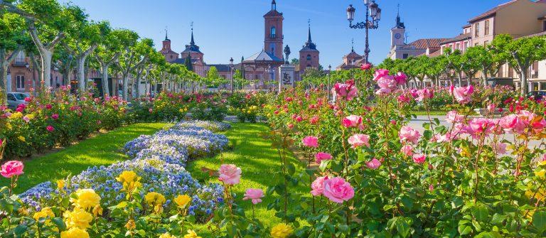 Plaza de Cervantes, Alcala de Henares, Spain_476644078