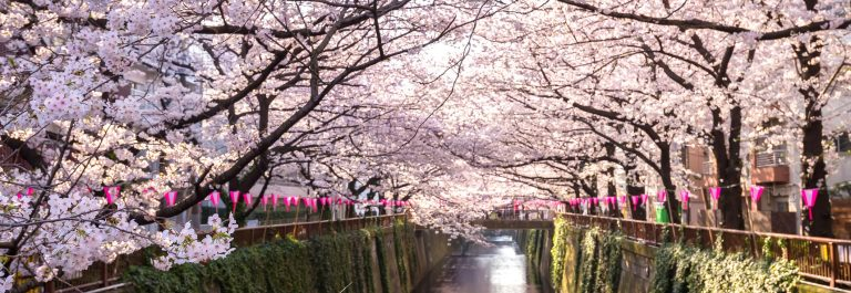 Tokyo, Japan at Meguro Canal in the spring season.
