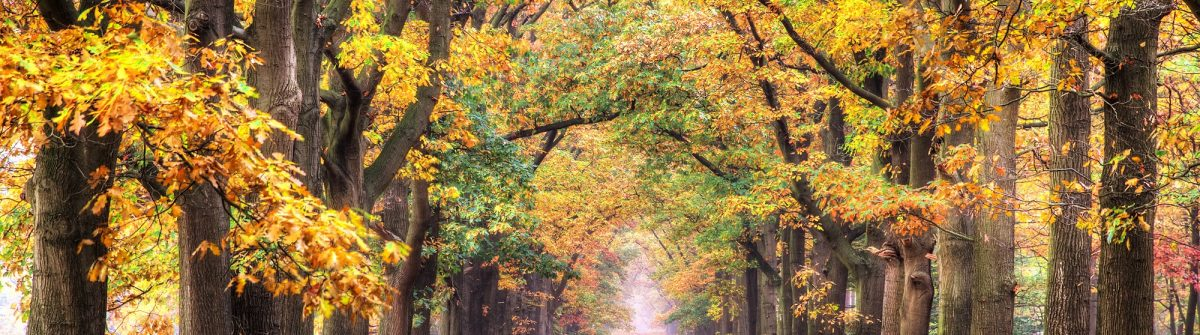Beautiful-autumn-forest-in-national-park-De-hoge-Veluwe-in-the-Netherlands.