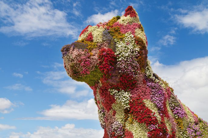 Flower-Dog-in-Bilbao-Basque-Country._219344164