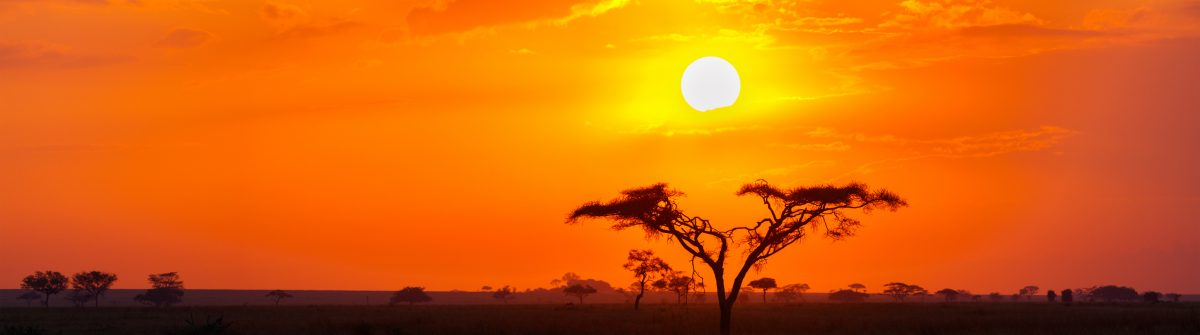 Savanna Sunrise and Acacia Tree in the Serengeti, Tanzania Africa