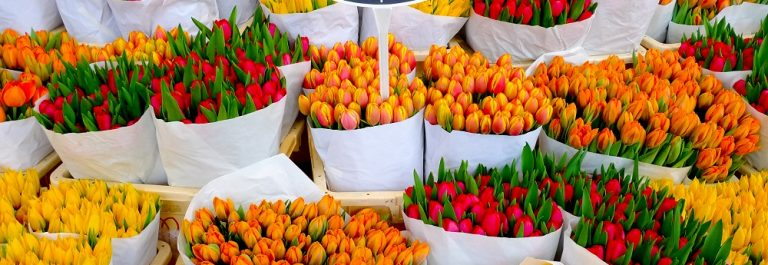 Colorful-tulips-on-sale-in-Amsterdam-flower-market_shutterstock_123824038_1000px