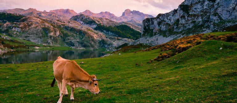 asturias-mountainsshutterstock_517424524