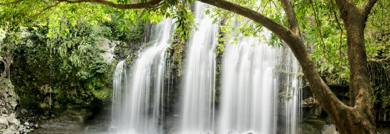 XXXL: Panoramic of tropical waterfall with backlit leaves