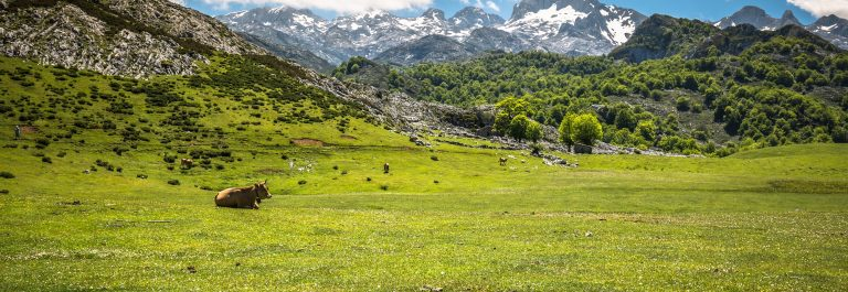 picos-europa_cantabria_shutterstock_400011553-x2000