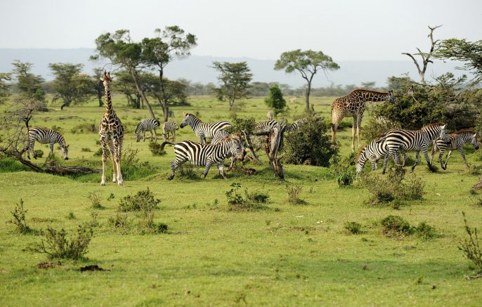 Savannah Kenya iStock_000017183482_Large