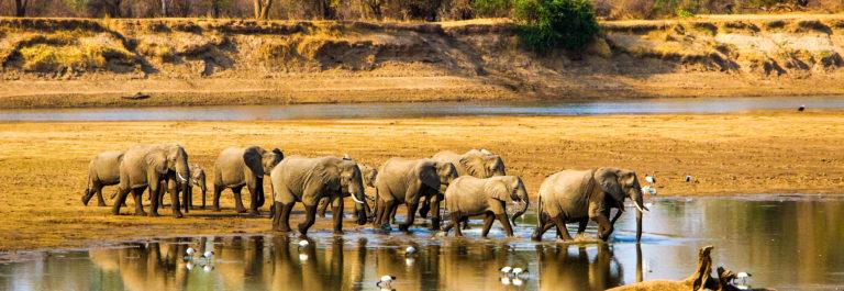 zambia-sambia-elefanten-elephants-istock_000050334986_large-2